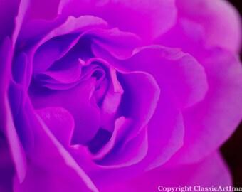 Rose Digital Download Photography Instant Download Flower Digital Photography Fine Art Photography Digital Wall Art Purple Flower