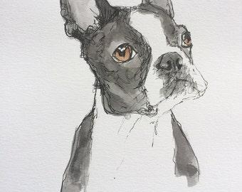 Boston Terrier - Original Illustration