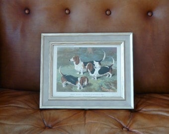 A framed late 19th century chromo lithograph of three Basset Hounds from Cassell's 'Illustrated Book of the Dog'