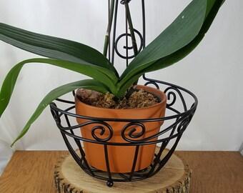 Vintage Metal Plant Basket~Wire Plant Basket~ Live Plant Holder Wire Basket Wire Potted Planter~Atomic Wire Plant Basket
