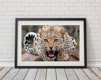 LARGE PRINT Jaguar Big Cat / Leopard Spots / Jaguar Spots / Wild Animal Print / Jaguar Photography / Leopard Photography / Wild Cat