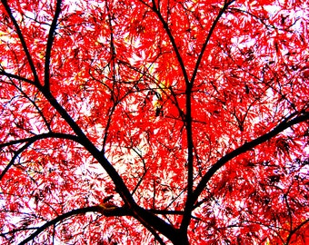 Ruby Tree Limited Edition 8x12 Print on Kodak Professional Endura Premier Metallic paper