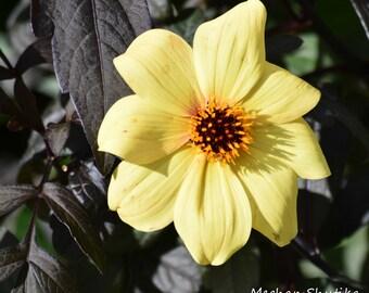 Flower of Gold