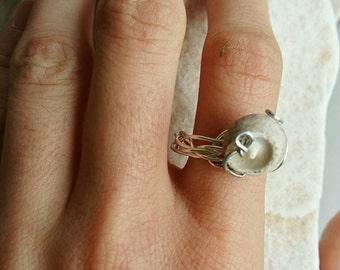 Sea shell ring