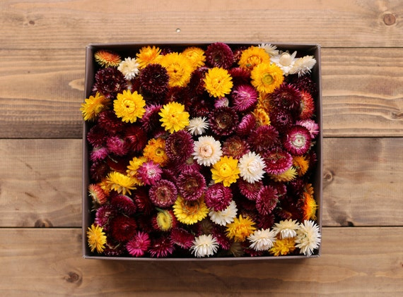 100 handpicked strawflowers heads dried flowers mix for Dried flowers craft supplies