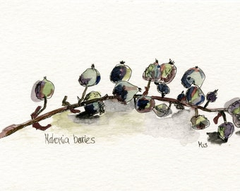 Original drawing  Mahonia Berries //  watercolour painting / ooak  Canson Montval paper