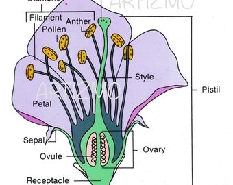 Set of 5 Health Biology Educational Botanical Diagrams from D.C. Health and Company, 1985, Instant digital download