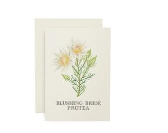 Bride Protea Card