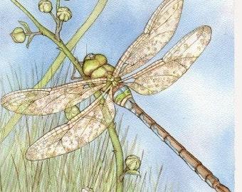 """Brambley Dragonfly 5""""x7"""" blank greeting card"""