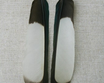 Black and white Magpie feather earrings
