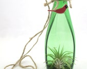 Recycled Bottle Hanging Plantscape, Decorative Plant Holder Terrarium, Wall Hanging Bottle Green Fused Glass Red Bird Cardinal with Airplant