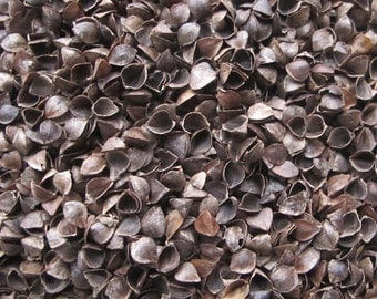 Buckwheat Hulls for Pillows