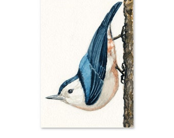 White-Breasted Nuthatch Art Print of Watercolor Bird Painting