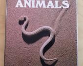 Venomous Animals Poisonous Animals Dangerous Animals