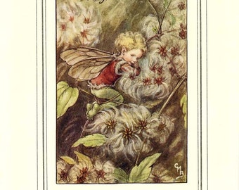 The OLD-MAN'S-BEARD Fairy Vintage Book Plate Original Page c. 1940 Book of the Flower Fairies Cicely M Barker