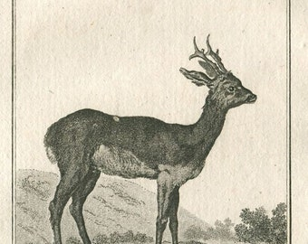 1800s Antique Print European Roe Deer, Le Chevreuil