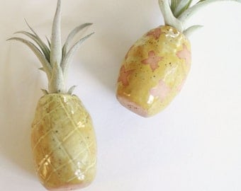 Air Plant Pineapple Holder
