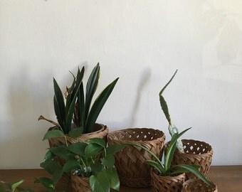 CHOOSE ONE - woven rattan wicker planters. boho nesting planters. rustic mid century bohemian woven basket. interior design woven planters
