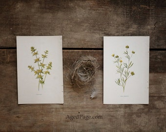 Vintage Botanical Prints, Farmhouse Decor, Rustic Wall Art, Yellow Bathroom Decor, Wildflower Prints, Set of 2 - Save 15%