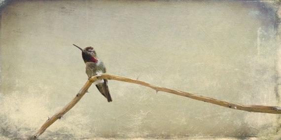"Hummingbird Sitting on a Bare Branch. Minimalistic Nature Photography. Wall Art. Wall Decor. 10""x20"" Fine Art Print. Bird Lover's gift."