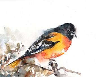Baltimore Oriole Bird ORIGINAL Watercolor Painting, Painting of Bird, Bird Art, Bird Painting
