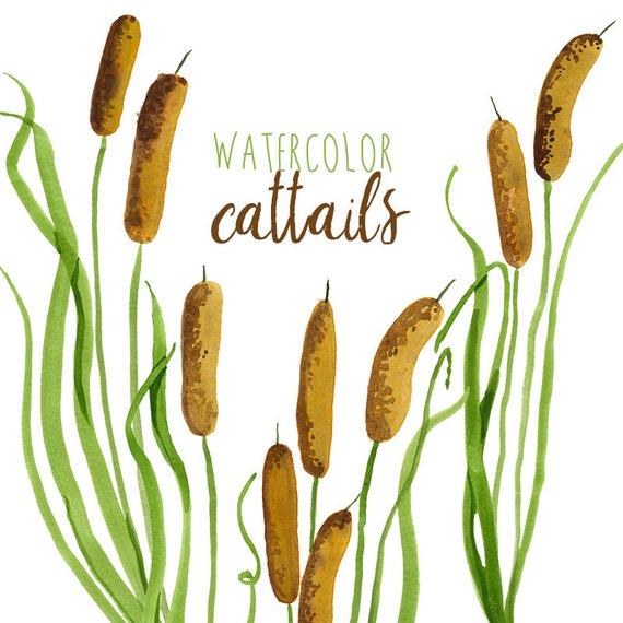 Watercolor Cattails Clipart Digital Swamp images Southern