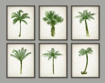 Palm Tree Botanical Wall Art Print Set of 6 - Modern Home Decor - Watercolor Palm Tree Prints - Watercolour Palm Tree Botanical Prints AB463