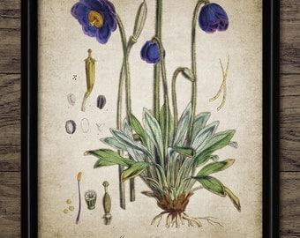 Vintage Flower Print - Flower Illustration - Botanical Flower Art - Floral Decor - Botanical Art - Single Print #1361 - INSTANT DOWNLOAD