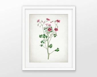 Pink Flower Art Print - Pink Flower Decor - Floral Decor - Botanical Print - Pink Wall Art - Single Print #1724 - INSTANT DOWNLOAD