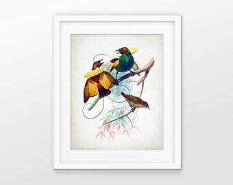 Bird Of Paradise Art Print - Bird Of Paradise Illustration - Bird Wall Art Poster - Ornithology Art - Single Print #2110 - INSTANT DOWNLOAD