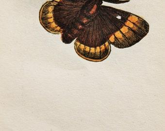 1843 Antique Moth Print, Hand Coloured - Great Egger Moth