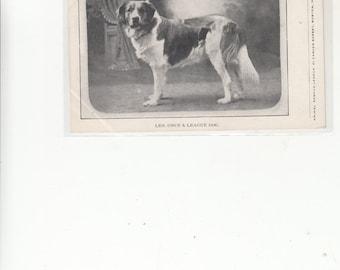 "Animal Rescue League Boston,1910 Postcard Unused ""LEO"" St Bernard Dog Once A League Dog"