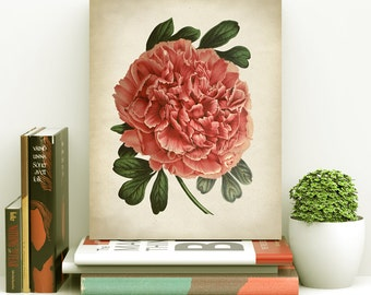 Pink peony BOTANICAL print, peony poster, peony art, vintage Botanical illustration, botanical wall decor, big pink flower