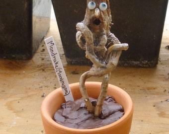 Mandrake, Mandragora