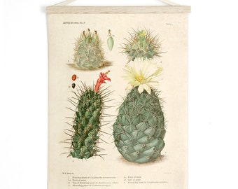 Pull Down Chart - Vintage Palm Springs Botanical Cactus Print Plate II. Educational Chart Diagram Cactus Desert Poster flowers CP263cv