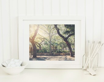 Charleston SC, tree print, Charleston photography, vintage photos, Charleston wall art, South Carolina, Spanish moss, live oak, sunshine