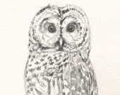 113 Tiny Owl gift card