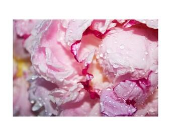 Flower Art Prints, Peonies, Modern Wall Art, Fine Art Photos, Large Peony Art, Pink Floral Decor, Rain Drops