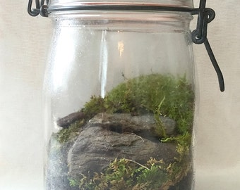 Live moss terrarium in vintage canister.
