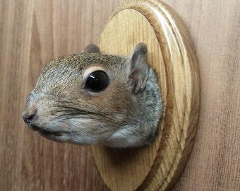 Squirrel head taxidermy mount