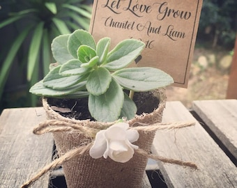 Mini plant wedding guest gift, table placement (Pick Up Only Newcastle NSW)