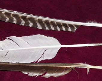 Handcut Feather Quill Pens Cut to Order