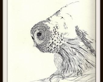 Barred Owl Book Print (1972), Frameable Wall Art, Bird Watcher Gift, Nature Home Decor, Black White Ink Drawing, Masculine, Log Cabin Art