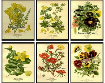 "Set of 6 flowers from the 1800's 14,21,28,34,36,46      (8""x10"" Prints)"