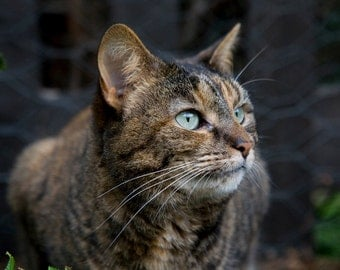 Cat Photo Tabby Cat Outside in Garden Stock Photo