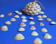 Natural Seashells wind chime – Hanging/Mobile Shells - Handmade Home Decor - Mediterranean Seashells - Cyprus