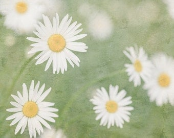 White Daisy Photograph, Daisies, Floral Art Print, Shabby Chic, Cottage Chic, Bedroom Wall Decor, Kitchen Wall Decor, Bathroom Wall Decor