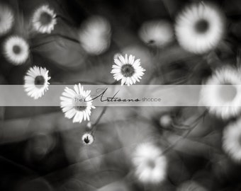 White Daisies Flowers Black and White - Printable Art - Digital Download - Photography Overlay - Graphic Design - Instant Art - Daisy Flower