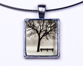 Chicago Wilson Park Tree Series: Photo 2