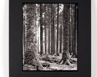 Gougane Bearra - Ancient Irish Forest, hand-processed black and white photography, large format landscape photography